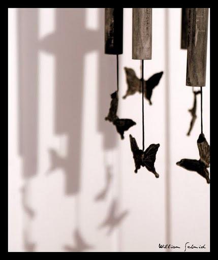 Butterflies-sepf