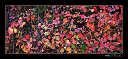 Color-petalsf-1