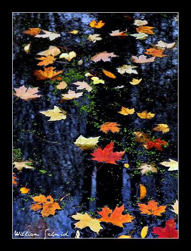 Leaves-on-water2