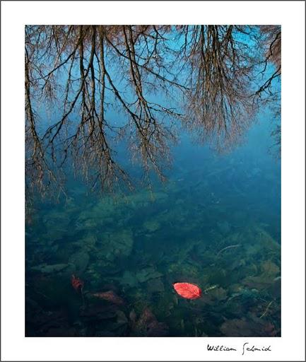 Red-leaf-2-1f_filtered