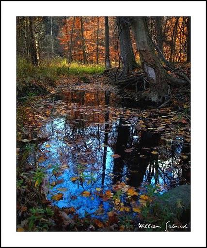autumn-reflection