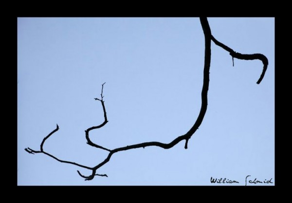 black-branch